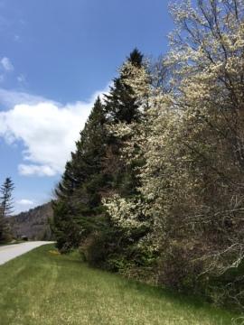spring2